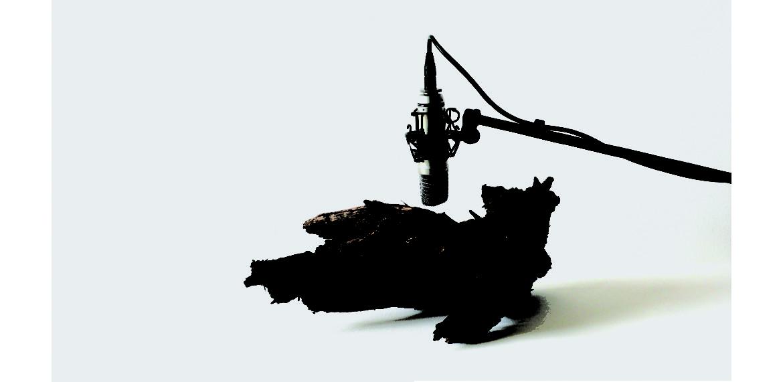 <em>25 woodworms, wood, microphone, sound system</em>